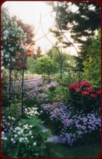 Flower garden views