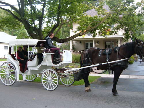 Horse and Buggy in Niagara-on-the-Lake