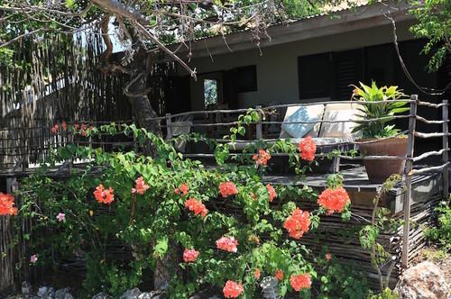Calabash Cottage - Two Bedroom Cottage off property - Jakes Village