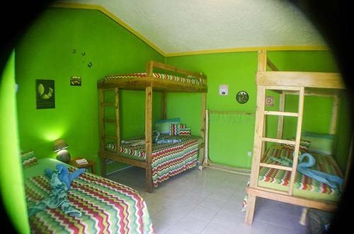 Irie Dorm Room - Go Natural Jamaica